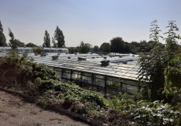 Plant Nursery In London For Filming